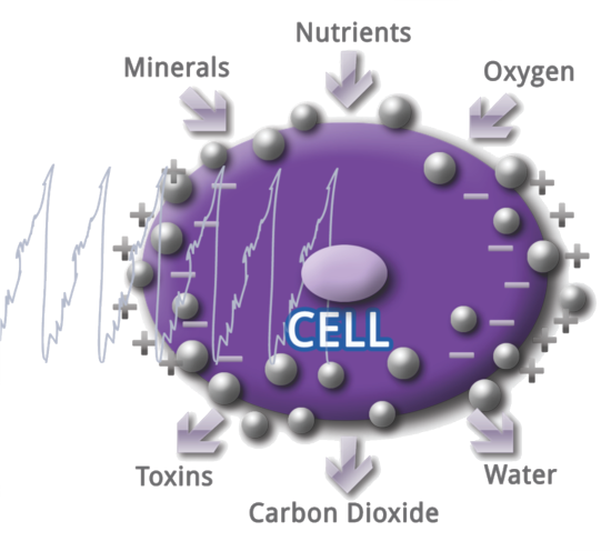 PEMF Cell Therapy